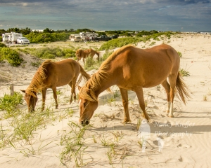 20150628_Assateague_025